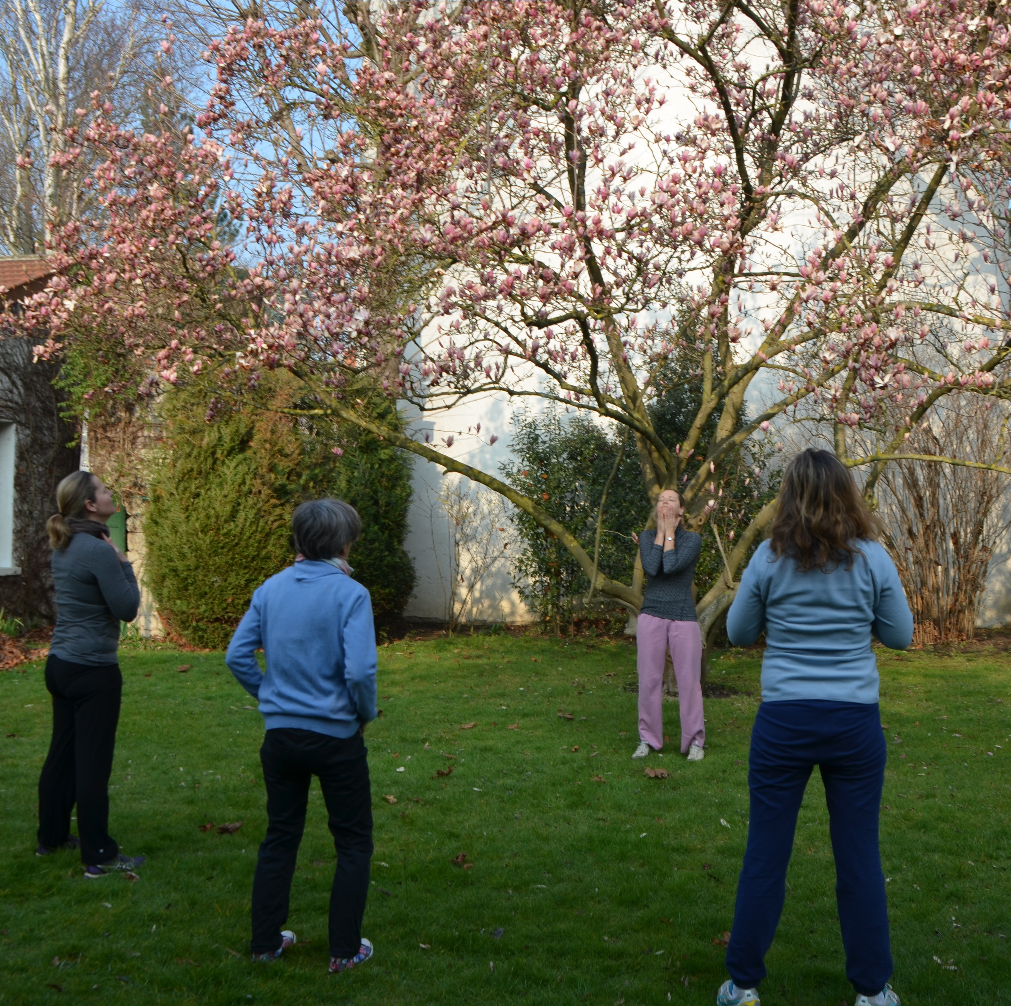 arborescence-qi gong dehors sous le magnolia 3